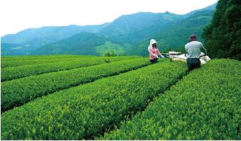 茶空民茶畑